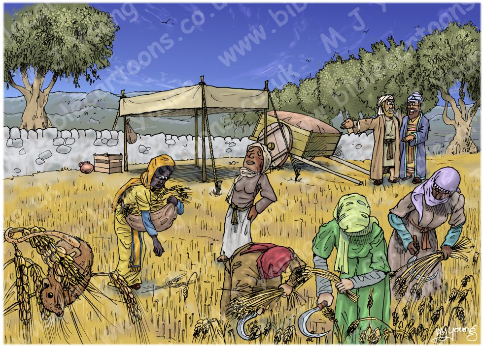 Ruth 02 - Harvesting - Scene 02 - Boaz arrives 980x706px col