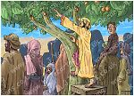 Luke 19 - Zacchaeus the tax collector - Scene 03 - Climbing tree 980x706px col
